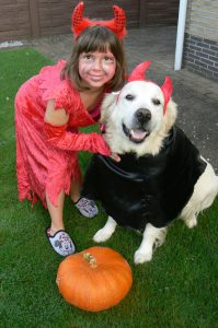 halloween golden retriever dog pumpkin
