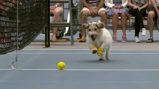 hond ballenjongen tennis