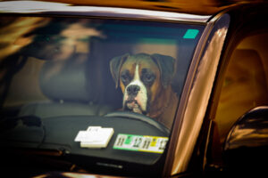 hond in warme hete auto
