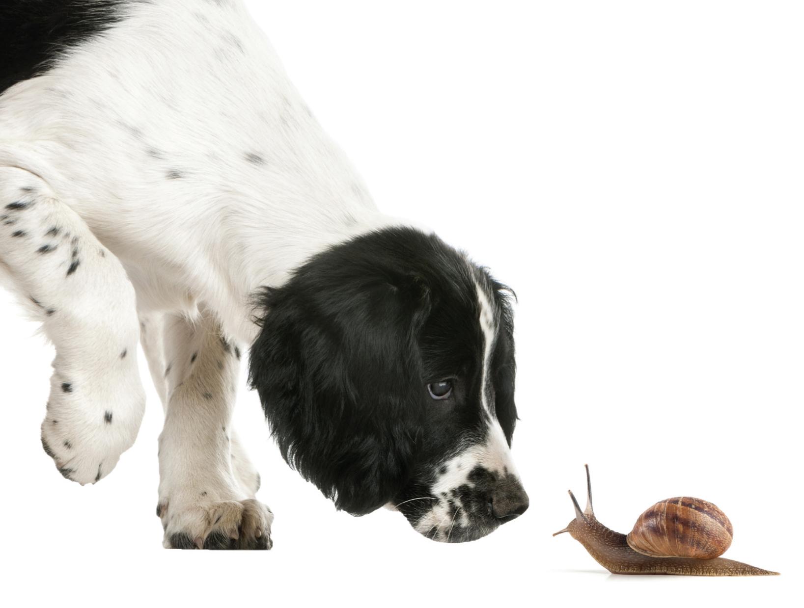 Opgepast: slakkenkorrels zijn giftig voor honden!