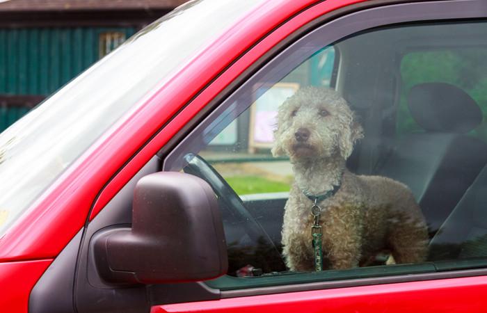 hond hete auto