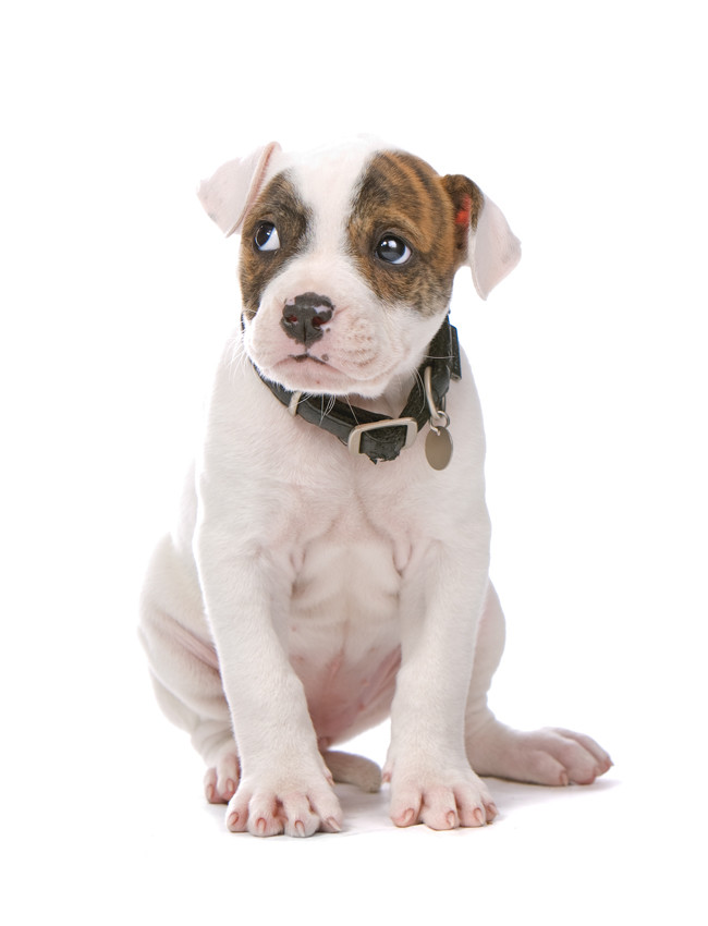 jouw hond in Woef