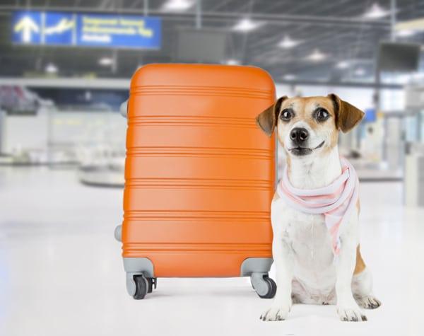 Honden op goedkope vluchten-web