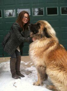 4 gigantische honden