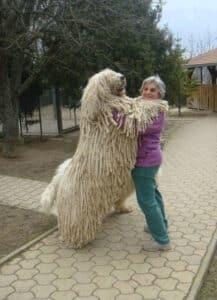 5. gigantische honden