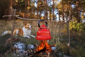vakantie kamperen met hond