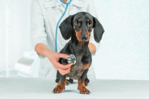 hond medische check-up