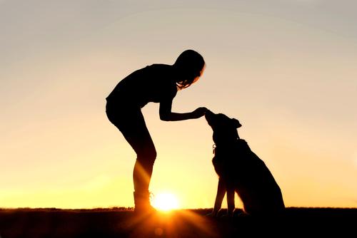 8 goede voornemens voor hondenbaasjes