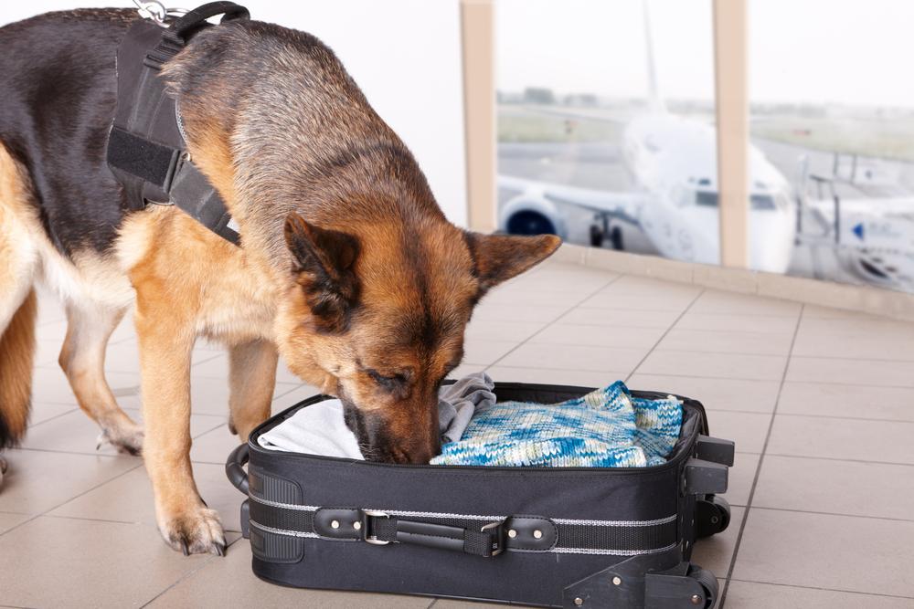 Snuffelhonden op luchthaven vinden worst en kaas in plaats van drugs