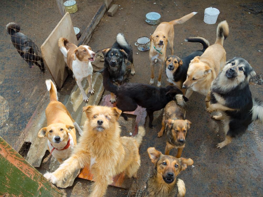 276 honden