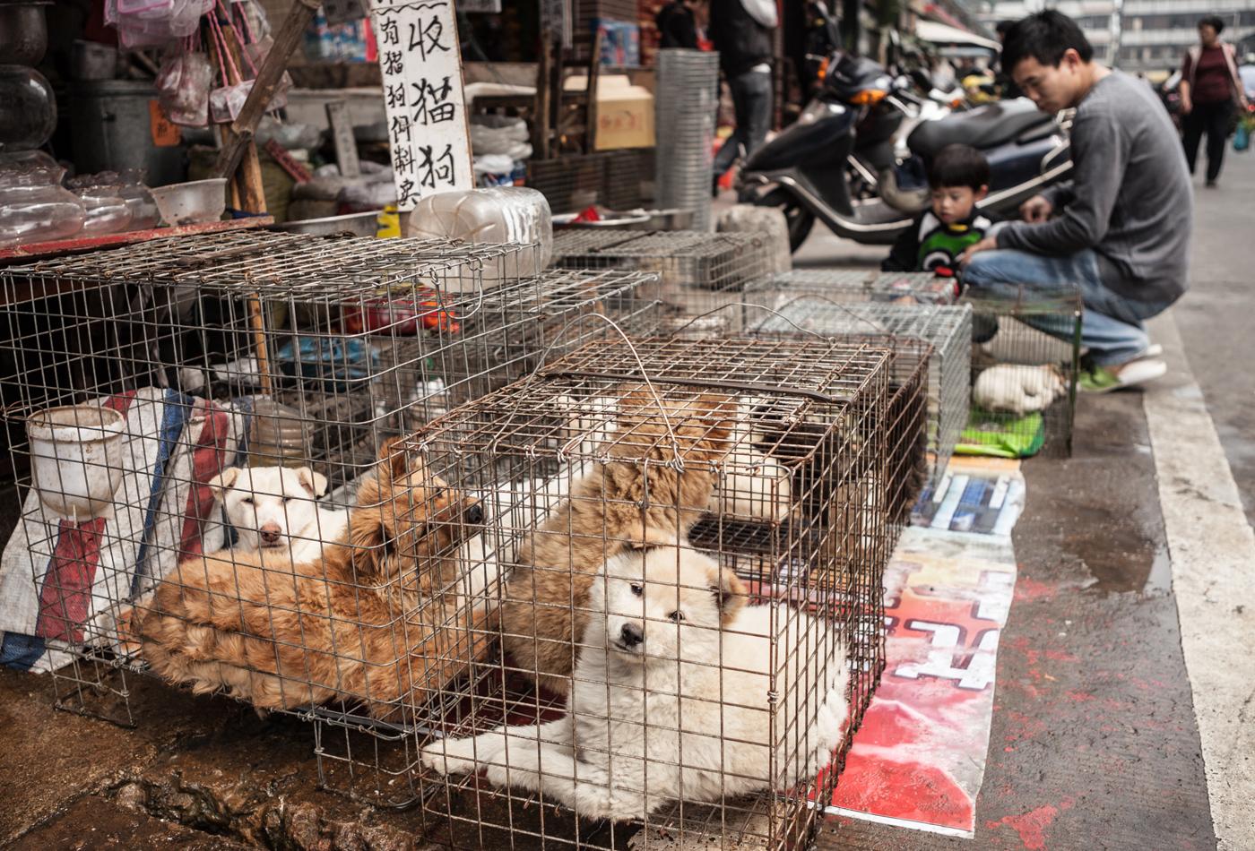 Hondenvleesfestival gaat door ondanks protest van miljoenen Chinezen
