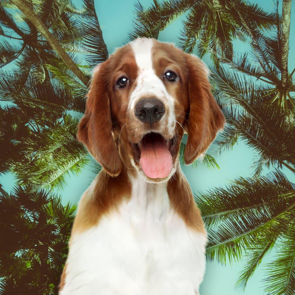 zomer hond