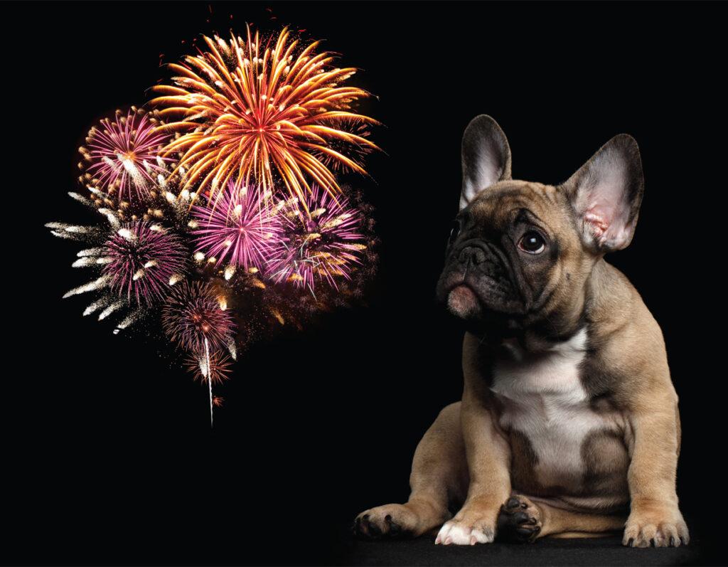 hond vuurwerk tips