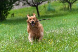 wandeling hond