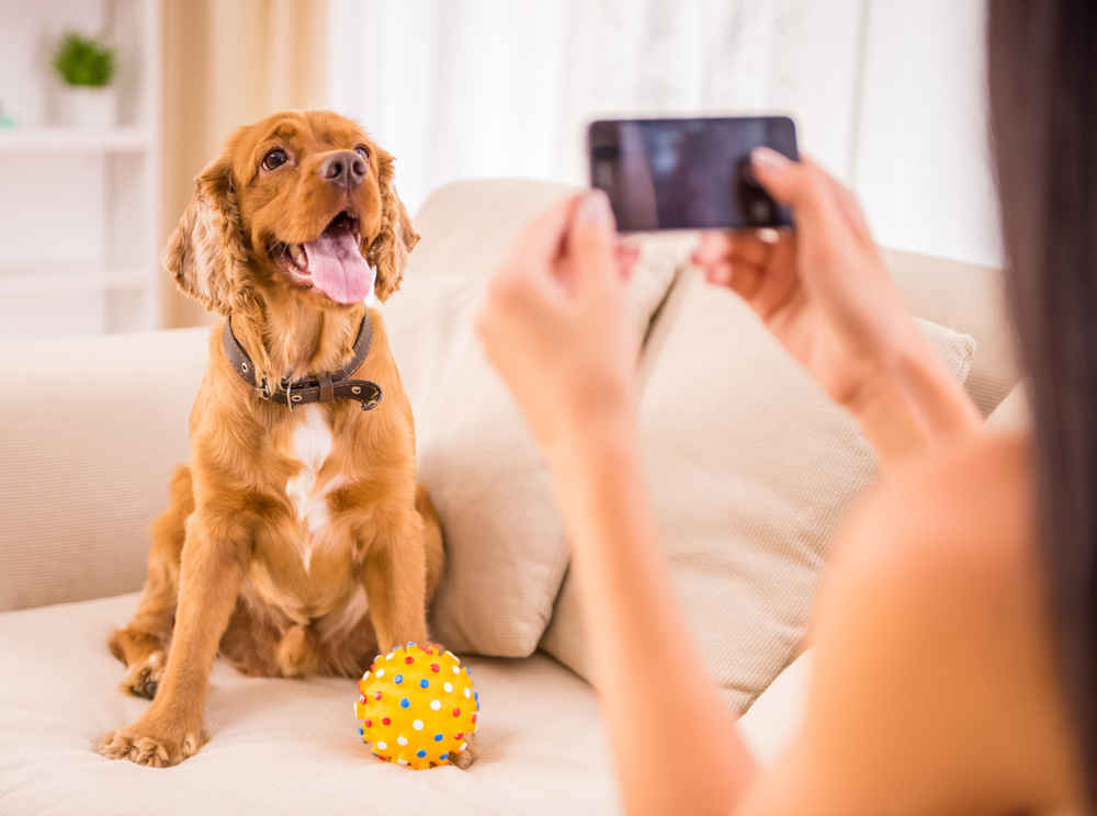 hond fotohoekje