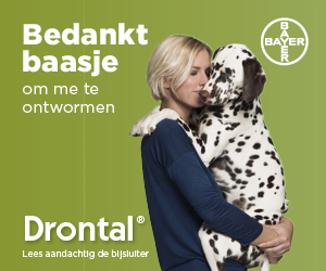 BAYER_Drontal_banner_300x250_NL.png