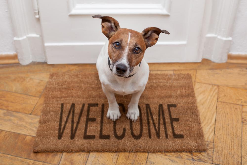 welkom honden huis
