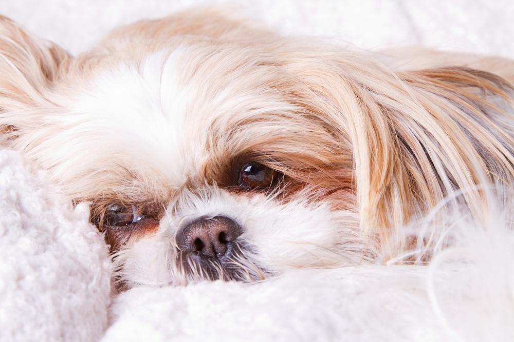 Gezonde hond geëuthanaseerd en samen met baasje begraven