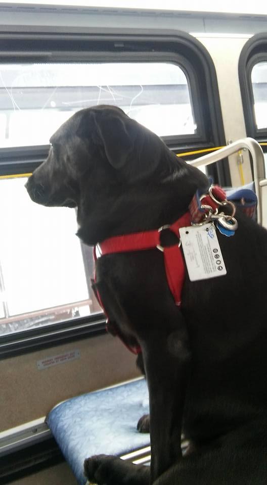 Hond rijdt elke dag zelfstandig met bus naar hondenweide – WOEF